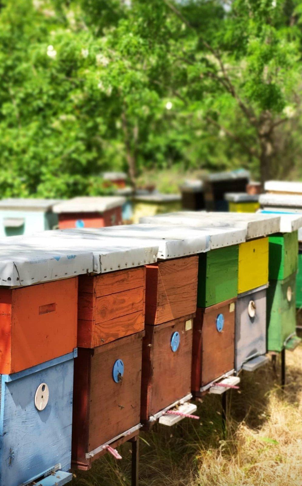 Kladovo: Do kraja meseca prijavljivanje pčelara za subvencije